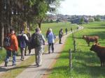 Hochlandrinder staunten nicht schlecht über die vielen Wanderer