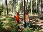 Einweisung am zu fällenden Baum